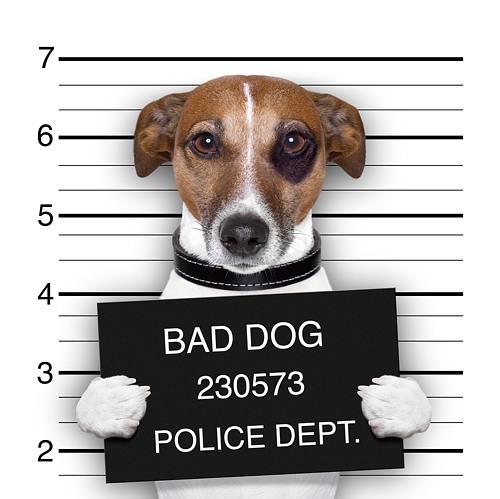 Diebstahlschaden Kamera Hund