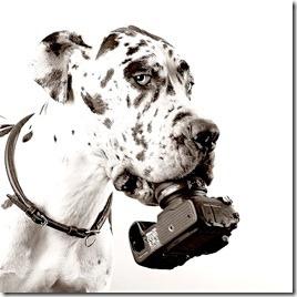 hund-kamera